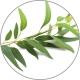 Medisana Aroma Eukaliptų eterinis aliejus