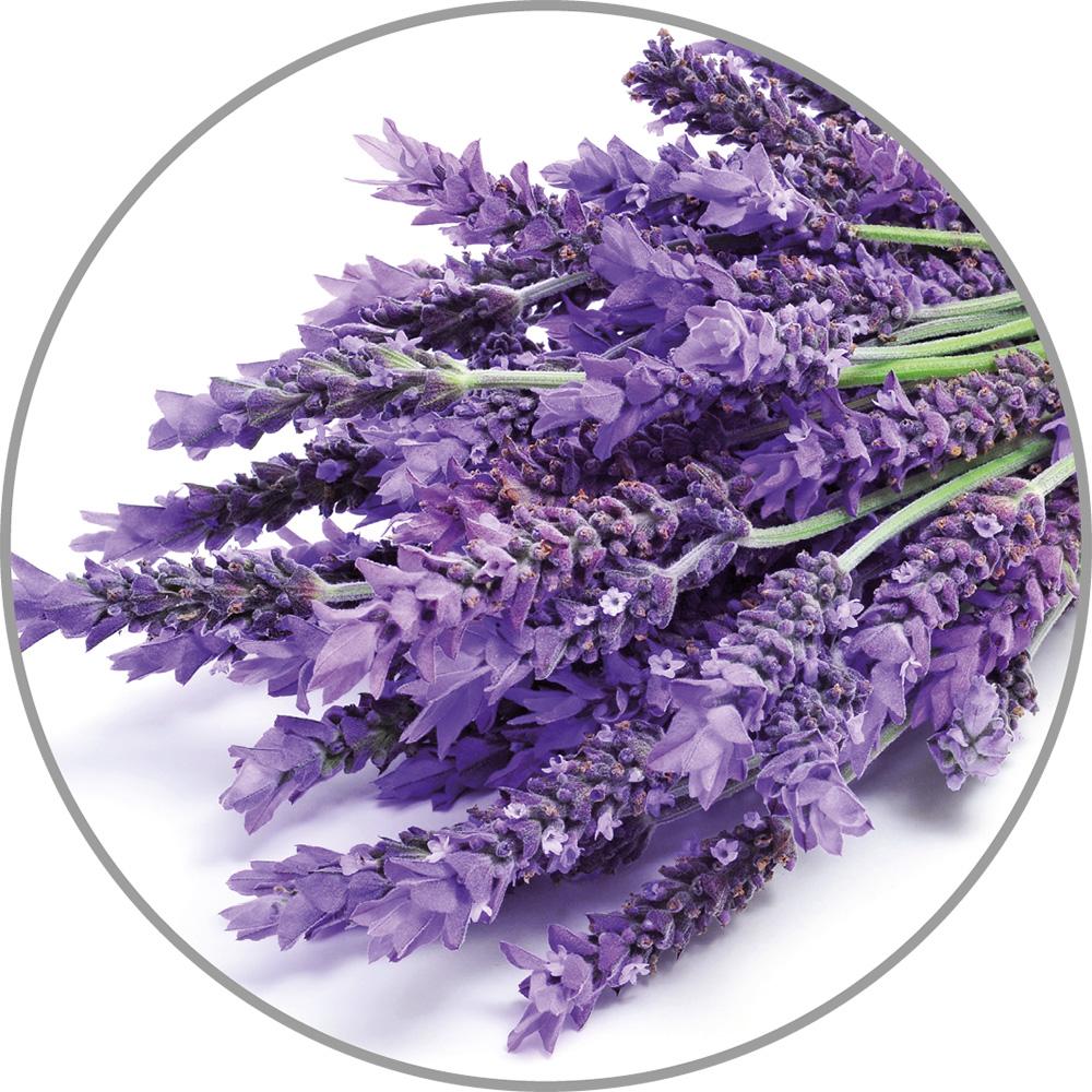 60032_Aroma_Lavendel.jpg