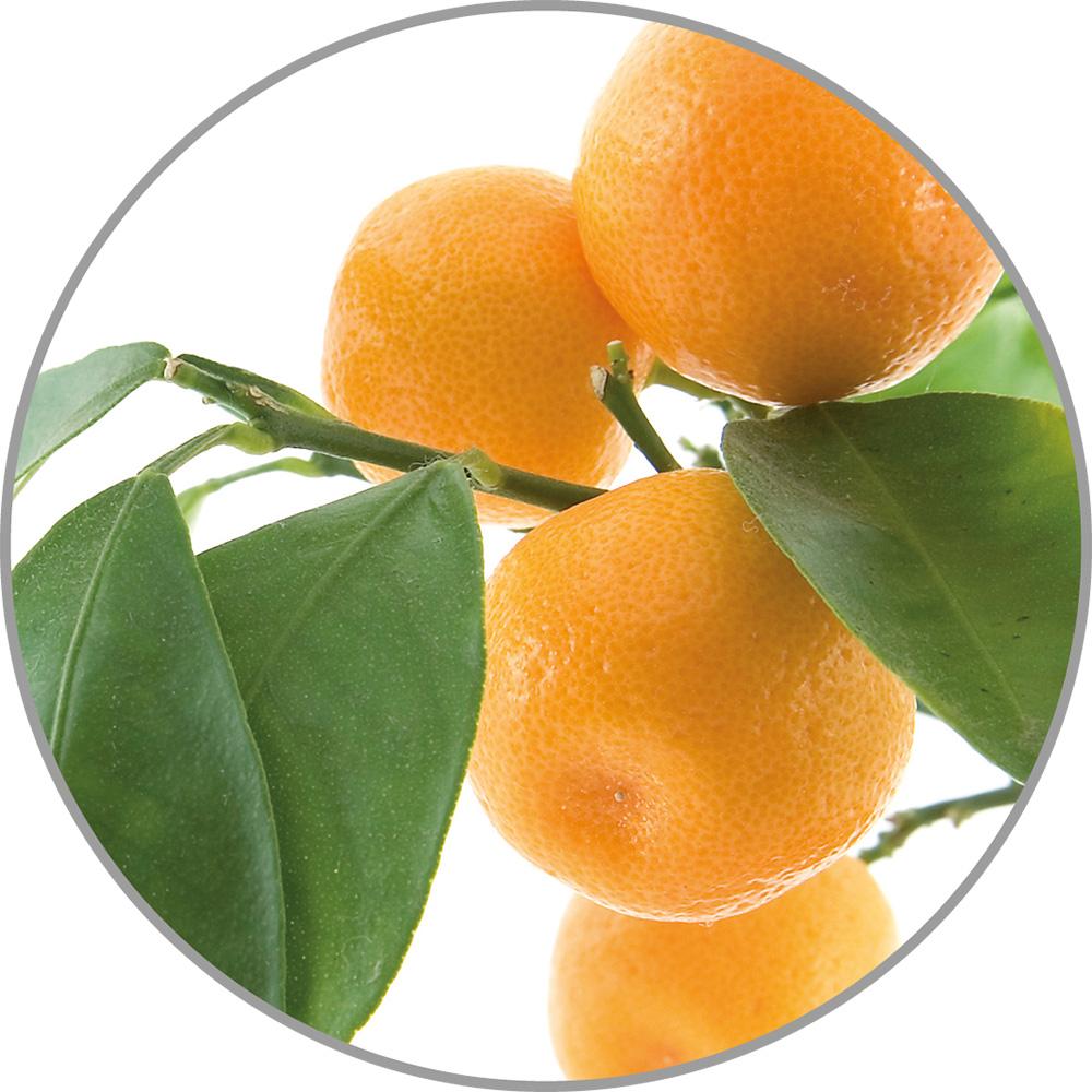 60037_Aroma_Orange.jpg